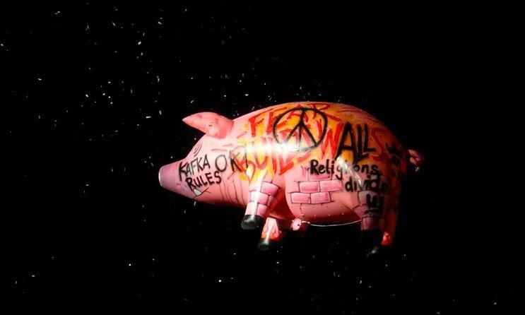 cerdo pink floyd
